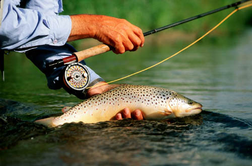 Fishing report ruby springs lodge fly water travel 39 s for Ruby river fishing report